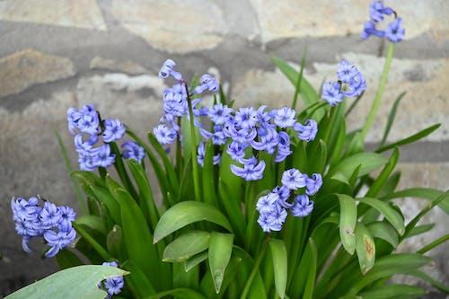 Бесплатное стоковое фото с букет, весенние цветы, весенний цветок, весна