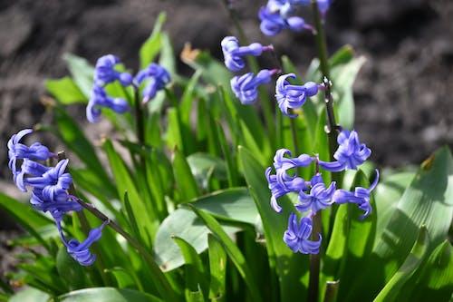 Бесплатное стоковое фото с весенние цветы, весенний цветок, весна, ветви деревьев