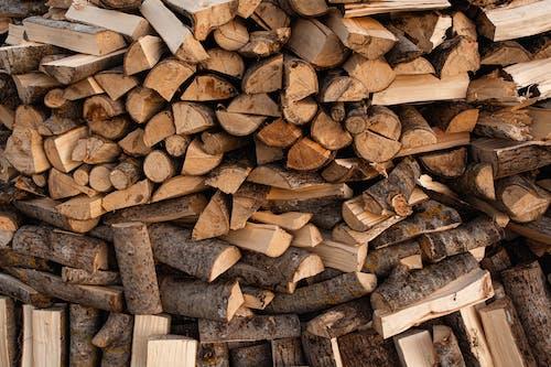 Gratis stockfoto met benzine, blaffen, boomstam, bosbouw
