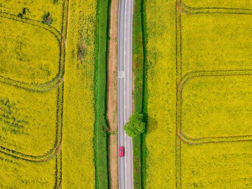 Fotos de stock gratuitas de abstracto, amarillo, Arte, áspero