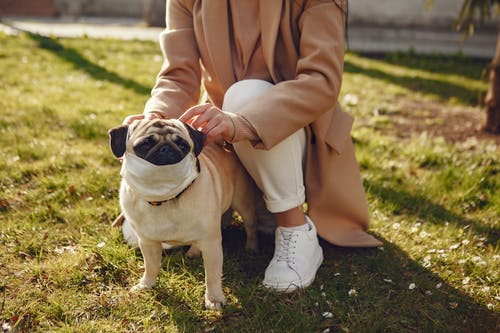 Crop female owner in casual clothes squatting and putting medical mask on pug for safety while spending time together in park in sunny day