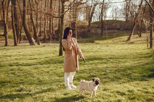 Photo of Woman and Dog on Grass Field