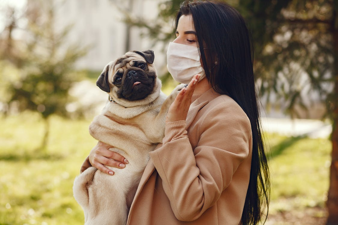Woman in Brown Coat Holding Fawn Pug