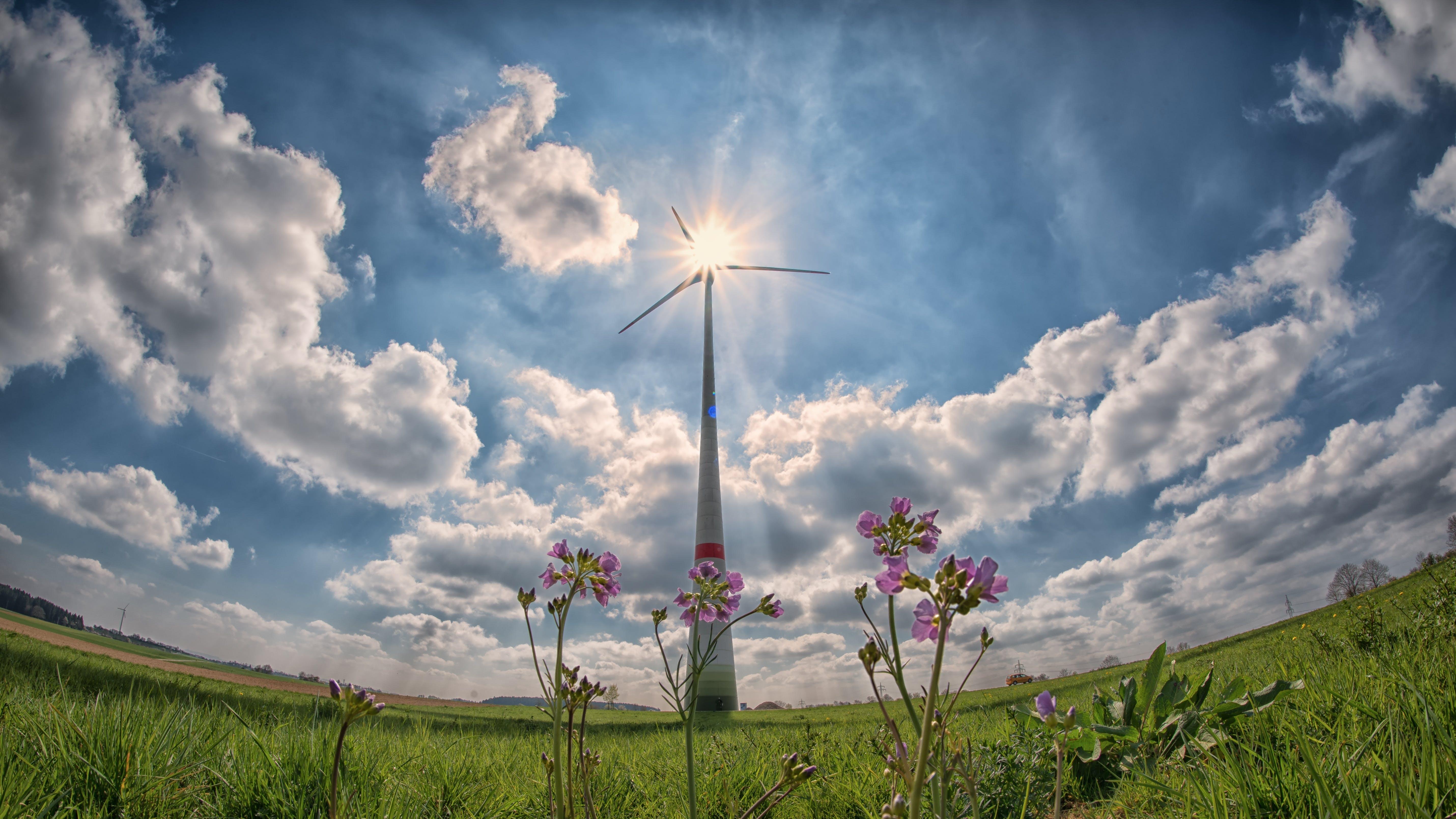 Kostenloses Stock Foto zu alternative, alternative energie, außerorts, blumen