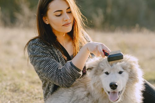 Photo of Woman Brushing Her Dog