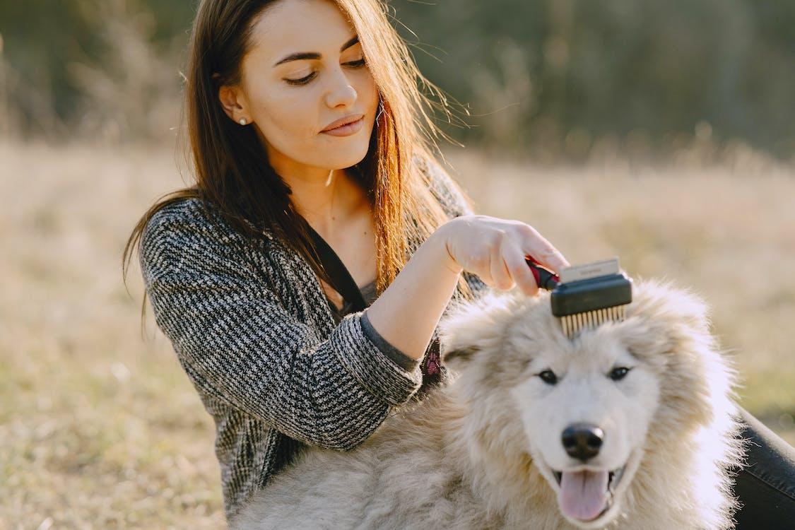 woman brushing a dog
