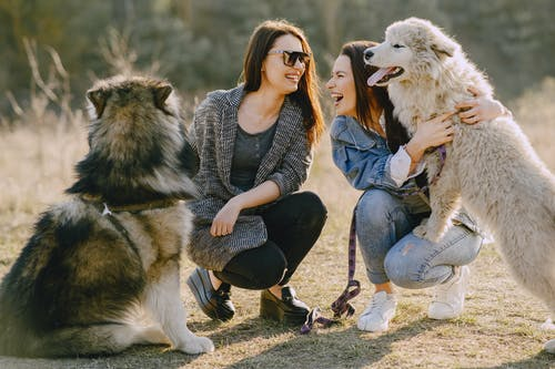 Positive female friends squatting with playful dogs in countryside