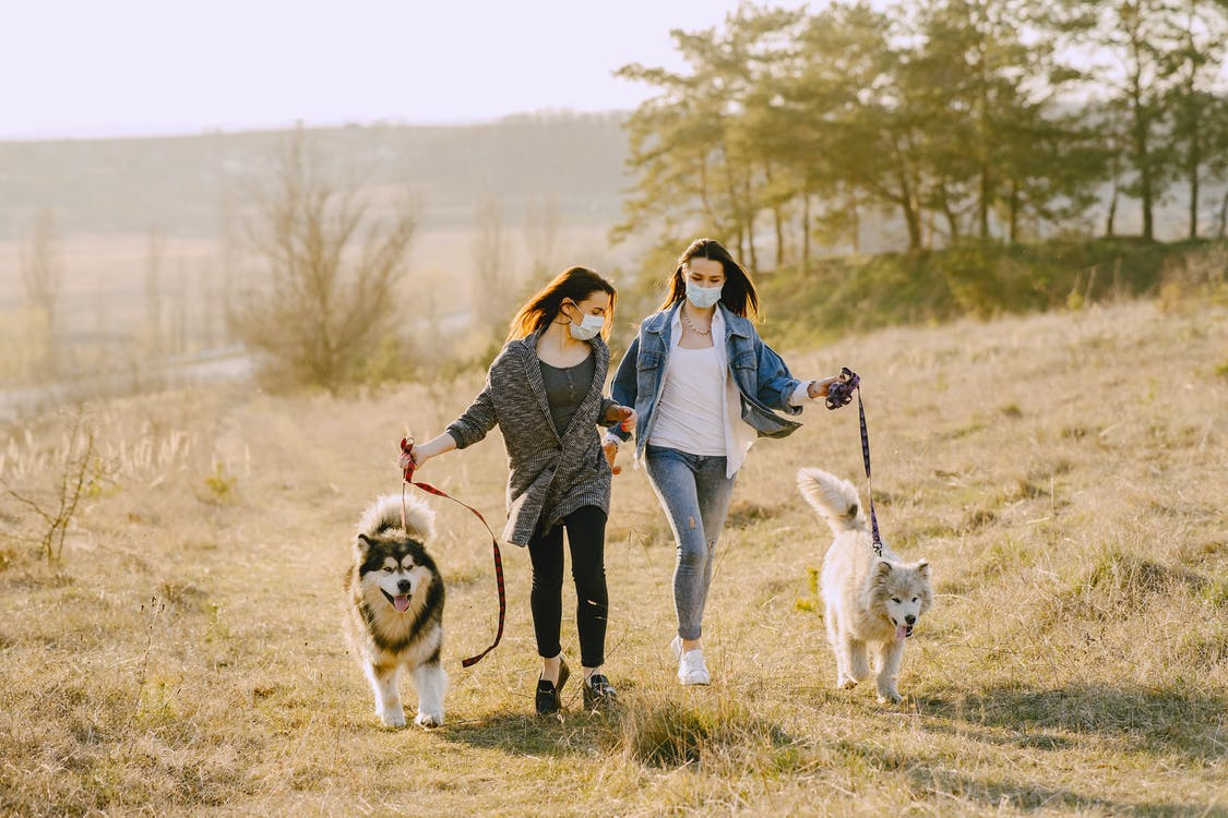 Female friends in face masks walking with dogs in countryside