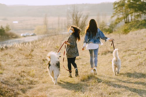 Photo of Women Walking With Their Dogs on Grass Field