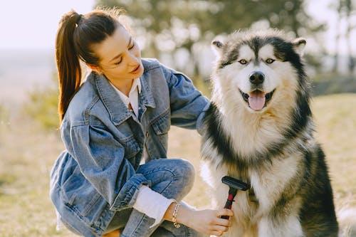 Woman in Blue Denim Jacket Holding Brushing Her Siberian Husky