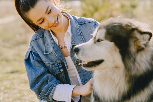 Cheerful woman caressing Husky dog on sunny day