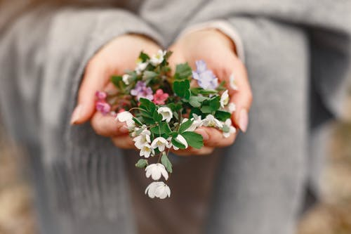 Photo of Person Holding White Flowers and Green Leaves