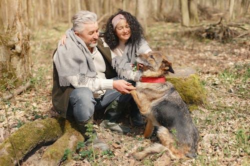 Imagine de stoc gratuită din afecțiune, animal, animal de casă, animal de companie