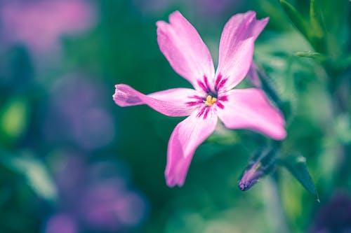 Bright blooming flower with delicate petals in garden
