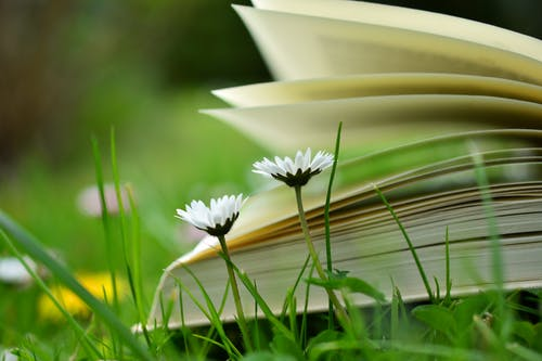 Imagine de stoc gratuită din câmp, creștere, estompare, floră