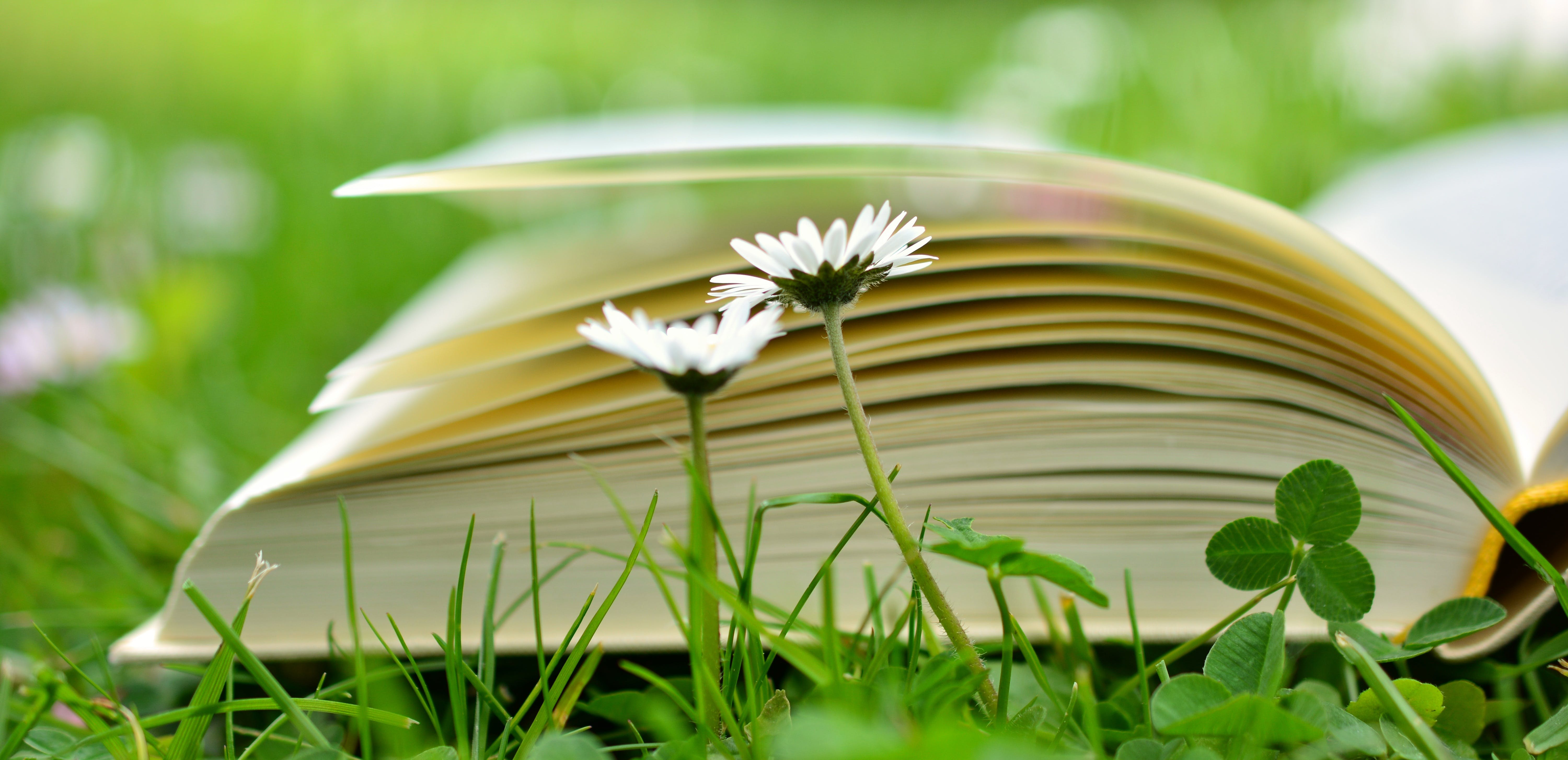 Free stock photo of books, meadow, relax, book
