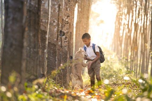 Бесплатное стоковое фото с деревья, заводы, лес, мальчик