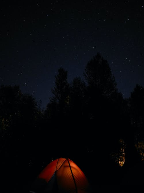 Free stock photo of camping, forest, night, stars
