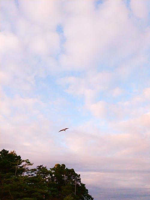 Photos gratuites de oiseau