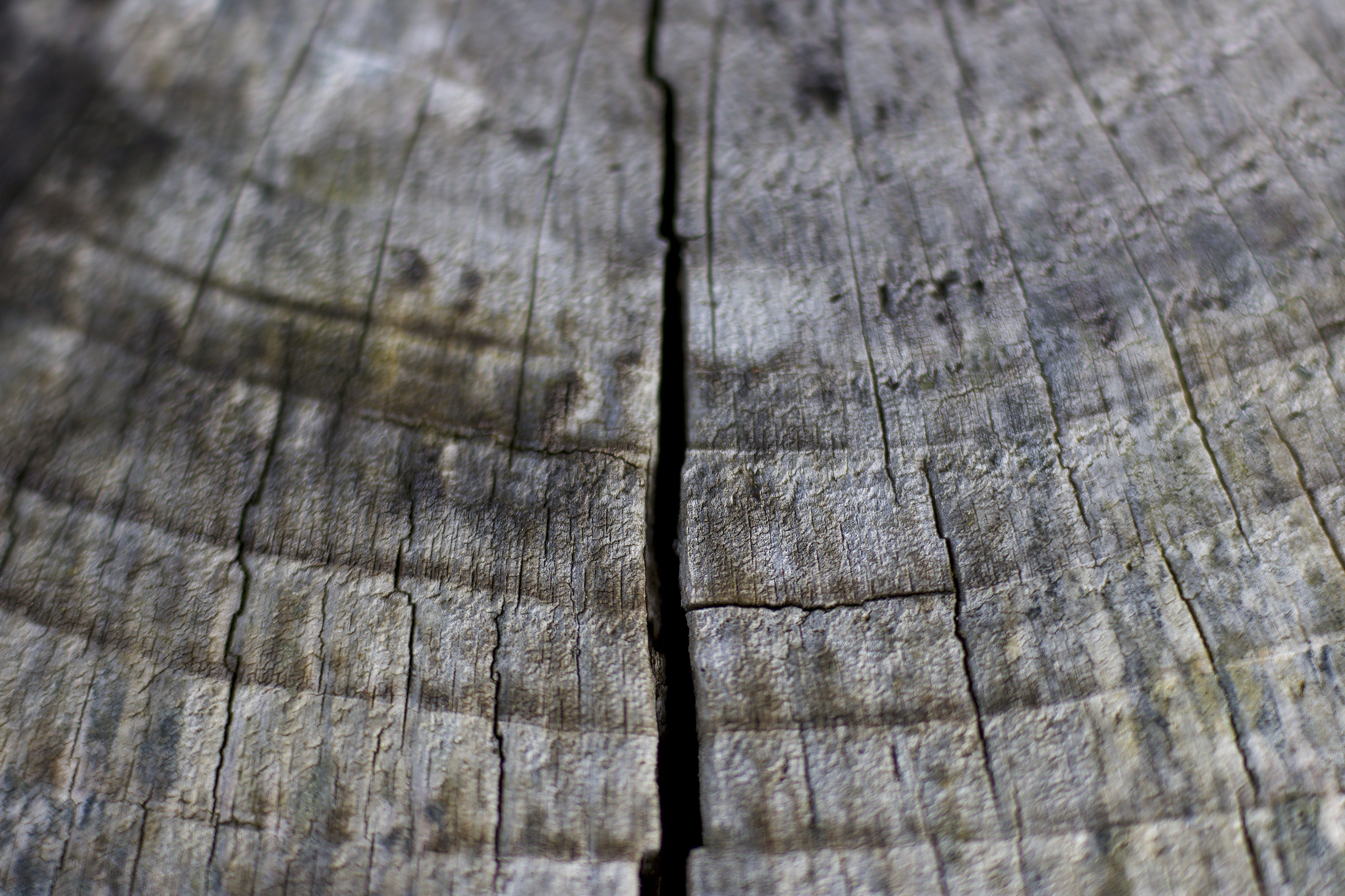 Free stock photo of tree, macro, chopped wood