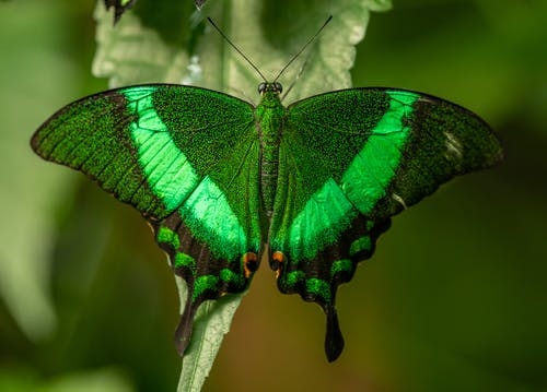 Colorful green butterfly resting on leaf in garden