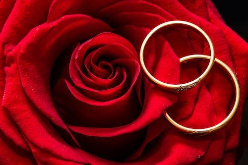 alyanslar, Aşk, beraberlik, çiçek içeren Ücretsiz stok fotoğraf