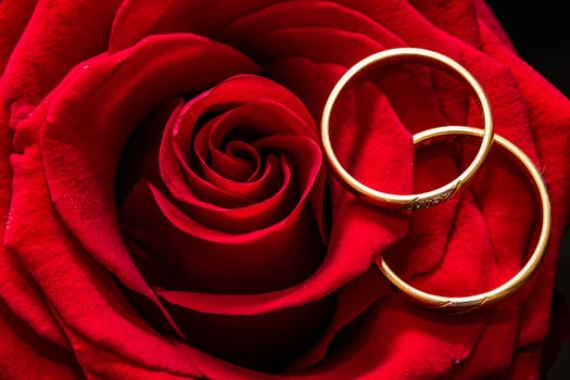 Two Gold-colored Rings on Red Rose Petals