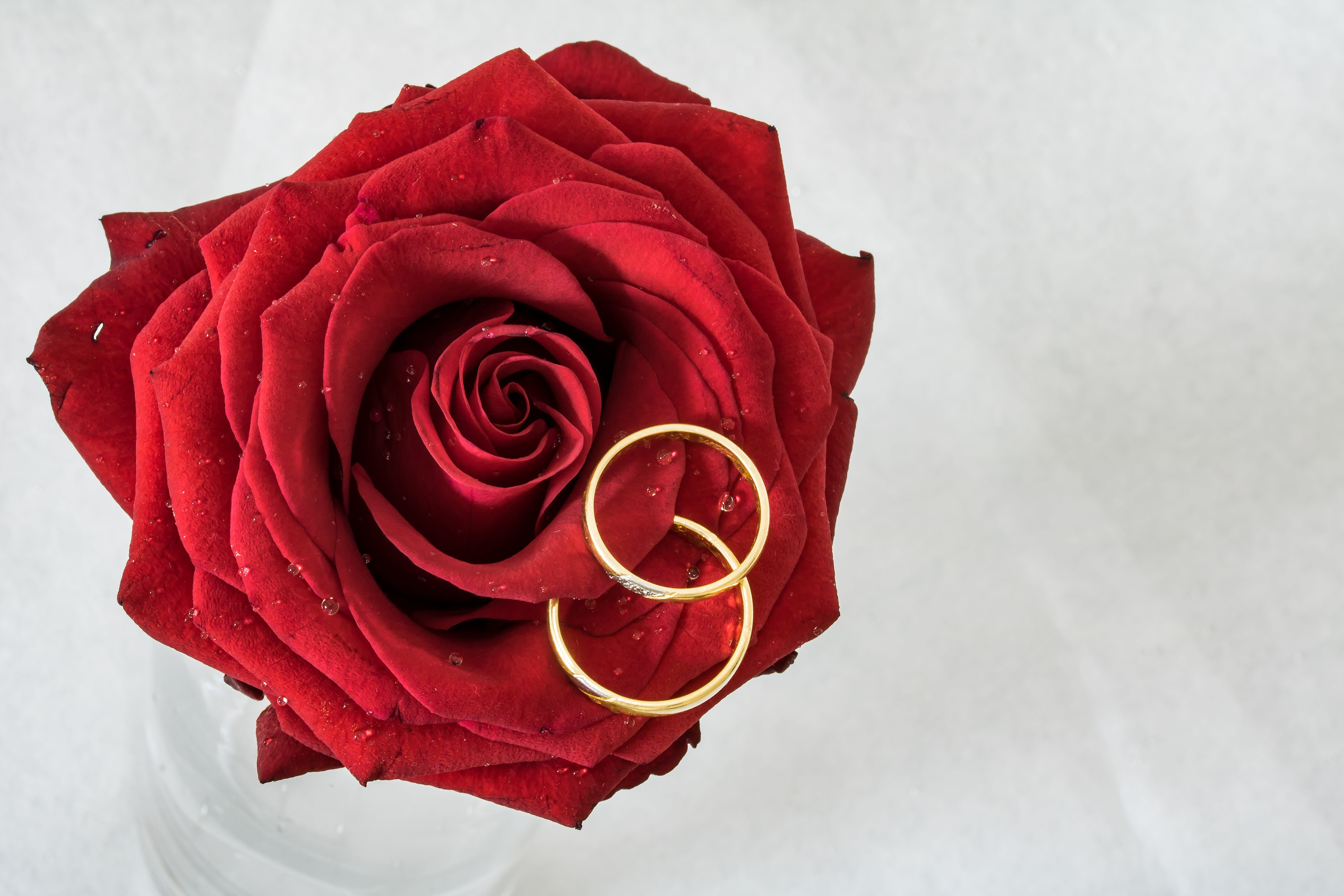 Free stock photo of love, rings, rose, together