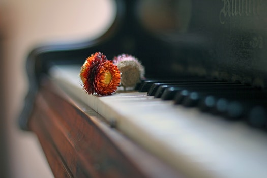 Free stock photo of wood, flowers, blur, piano