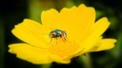 Ảnh lưu trữ miễn phí về bay, con ong, côn trùng, hệ thực vật