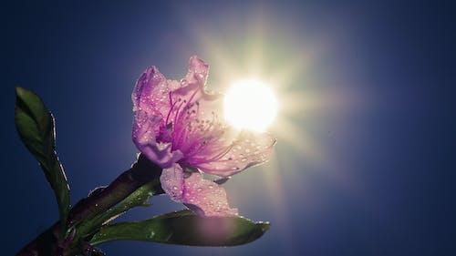 Ảnh lưu trữ miễn phí về ánh sáng trở lại, hoa đẹp, mặt trời