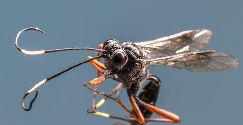Ảnh lưu trữ miễn phí về ăng ten, ánh sáng ban ngày, bay, bọ cánh cứng