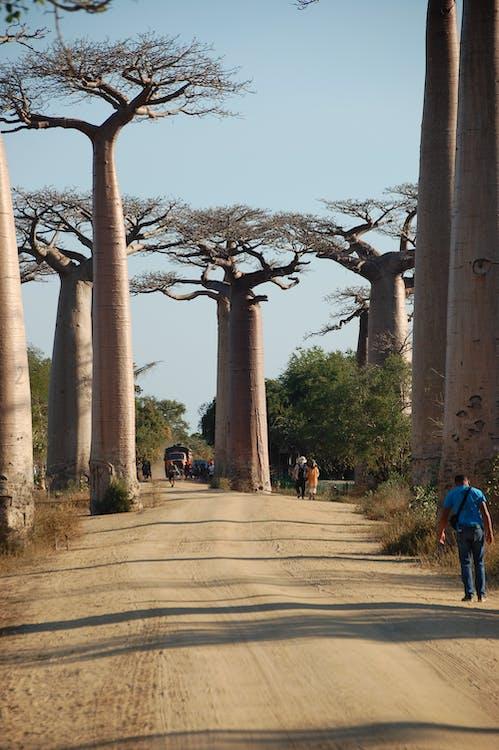 Photos gratuites de ancien, arbre, archéologie