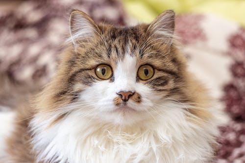 Cute fluffy cat sitting on blanket