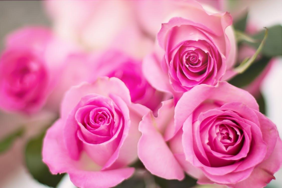 กลีบดอก, กลีบดอกไม้, กำลังบาน
