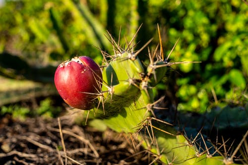 Red Apple Fruit on Green Plant