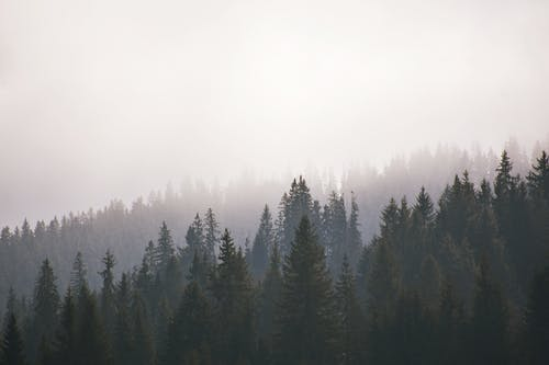 Lush forest covered with thick layer of fog