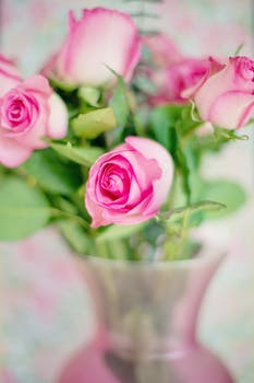 1000 engaging pink roses photos pexels free stock photos free stock photo of love romantic flowers petals mightylinksfo