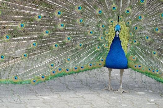 Free stock photo of nature, bird, pattern, animal