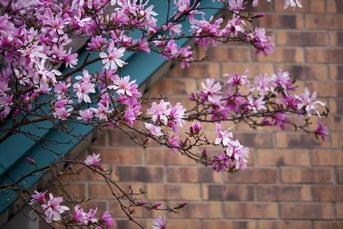 弹簧, 春天, 春天的时候 的 免费素材图片