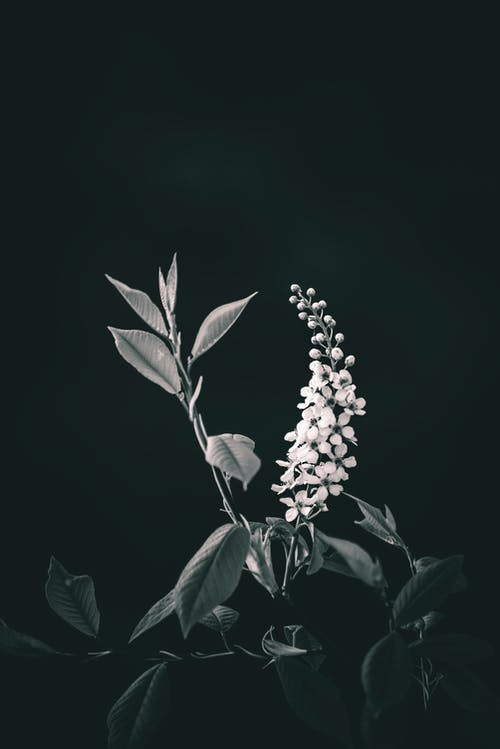 Free stock photo of art background, black and white, black and white background