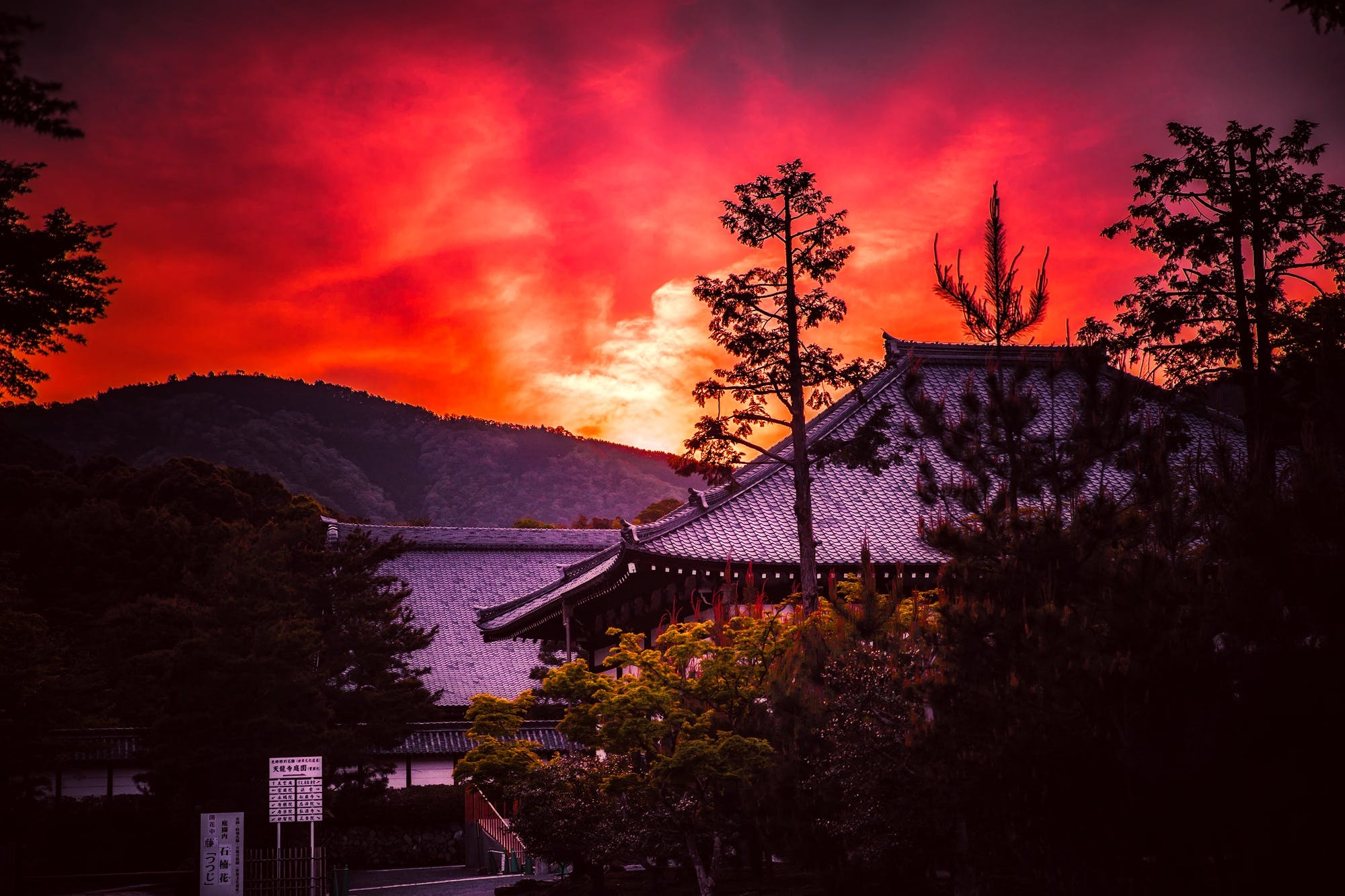 açık, ağaçlar, akşam, arkadan aydınlatılmış içeren Ücretsiz stok fotoğraf