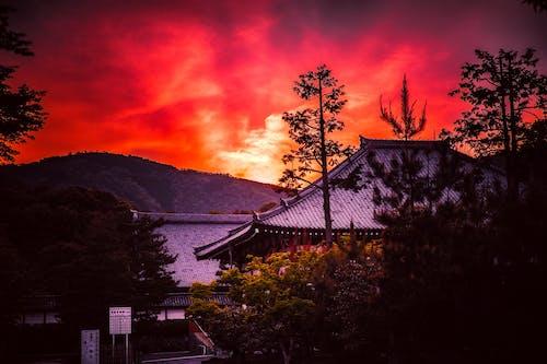 Immagine gratuita di alba, alberi, bellissimo, cielo