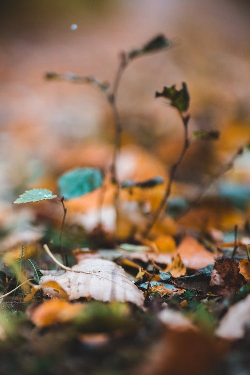 Dry yellow leaves in autumn woods