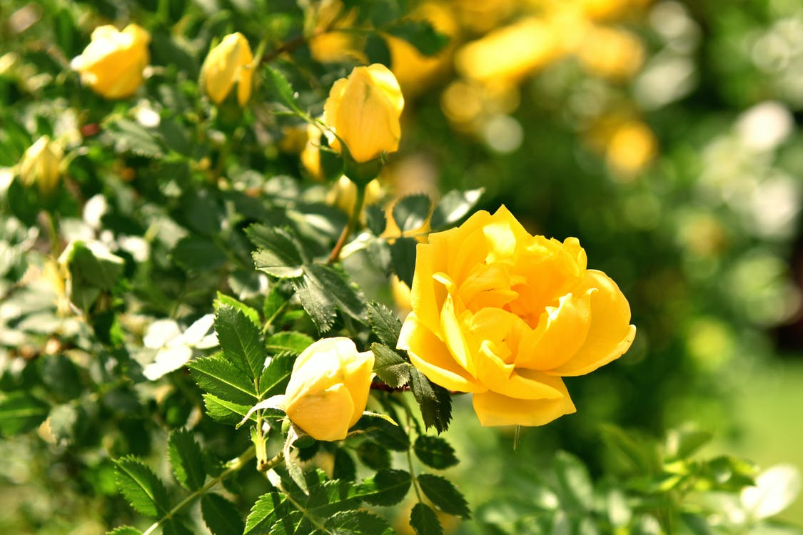Blooming branches with yellow flowers of green plant