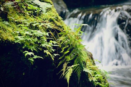Free stock photo of fern, green, tropical, waterfall