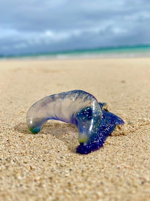 Foto stok gratis lautan, lelaki perang, pantai, pasir