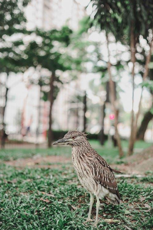 Brown Bird on Green Grass