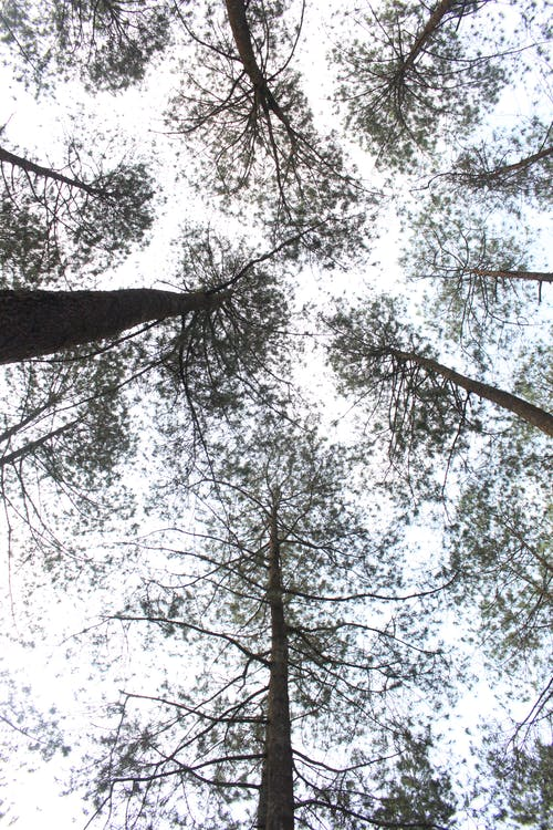 Free stock photo of nature, trees