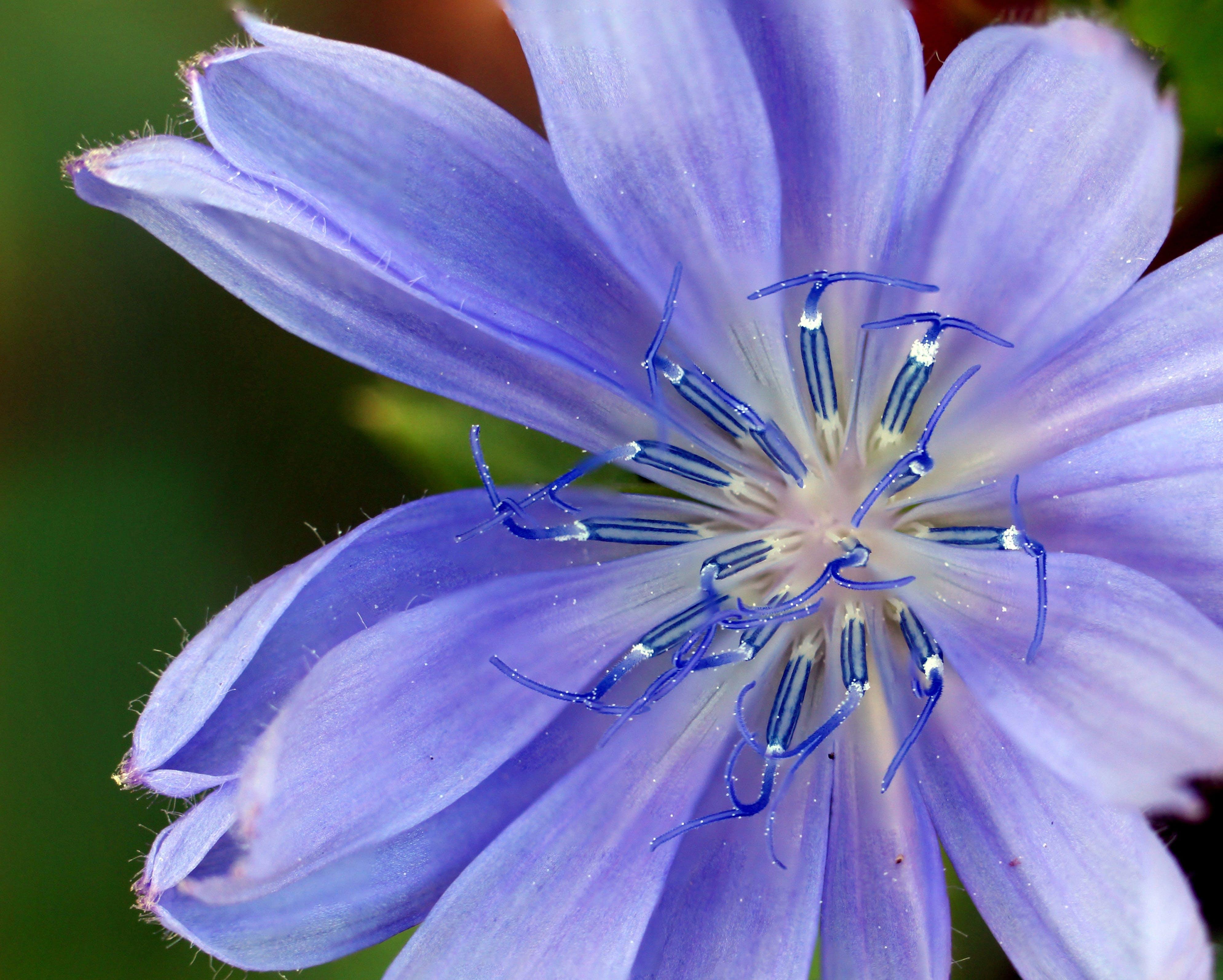 Gratis stockfoto met bloeien, bloeiend, bloem, bloemblaadjes